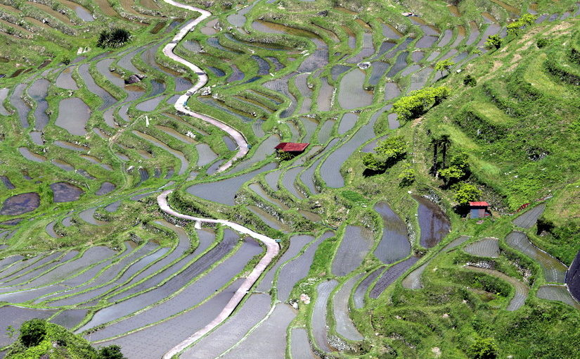 通り峠 丸山千枚田展望所からの棚田風景は日本一といって過言なし!